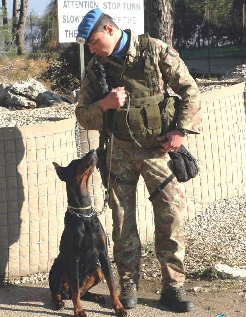 Il Dobermann come cane militare, seconda parte